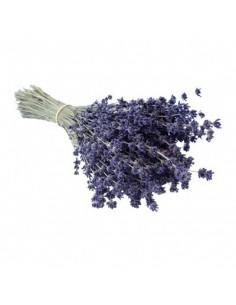 Natürlicher Lavendelbund extra blau, groß