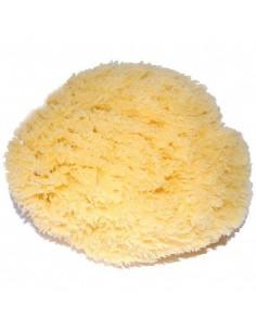 Natural sea sponge, large